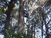 10メートル程の木に登っています