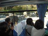 バスの車内からゾウを観察