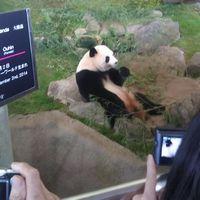 可愛らしすぎるパンダを撮影