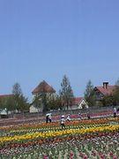 お花畑が素敵なブレーメの丘