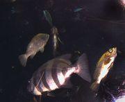 優雅に泳ぐ魚
