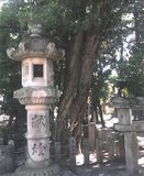 八幡神社のラカンマキ