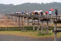 雨の中の蓬莱橋